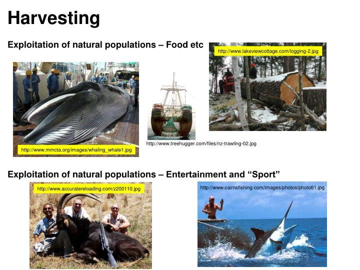 http://www.cairnsfishing.com/images/photos/photo61.jpg