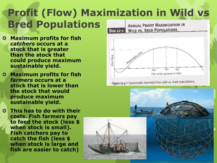 Profit (Flow) Maximization in Wild vs Bred Populations