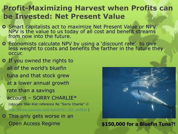 Profit-Maximizing Harvest when Profits can be Invested: Net Present Value