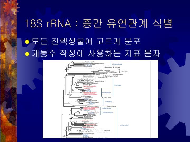 18S rRNA :