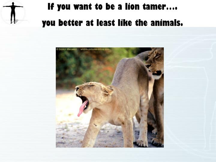 If you want to be a lion tamer….