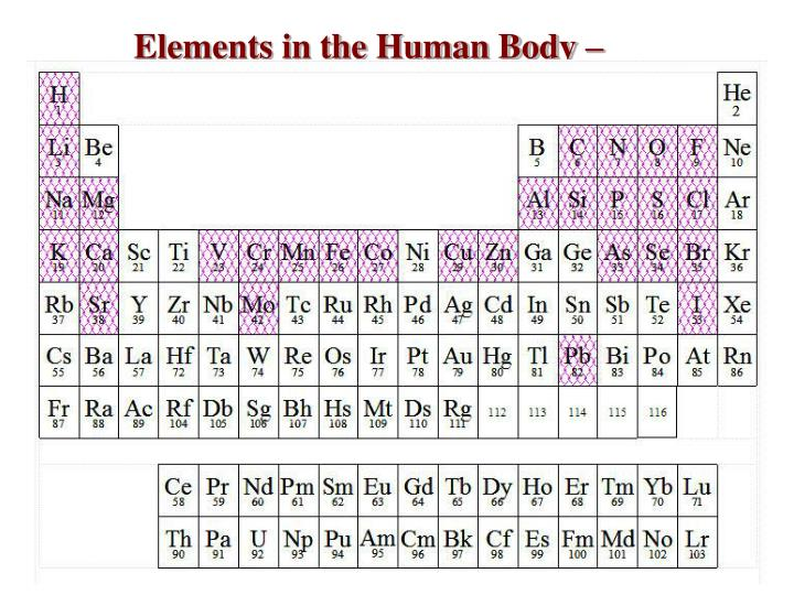 Elements in the Human Body –