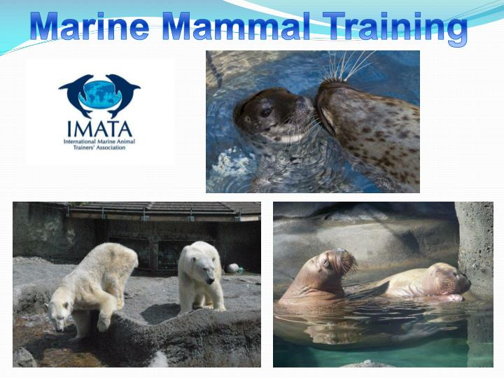 Marine Mammal Training