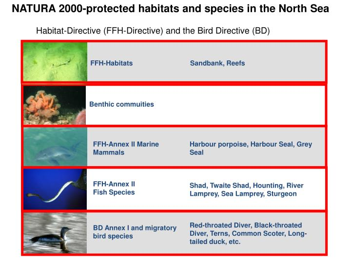 NATURA 2000-protected habitats and species in the North Sea