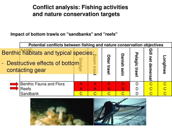 Benthic habitats and typical species: