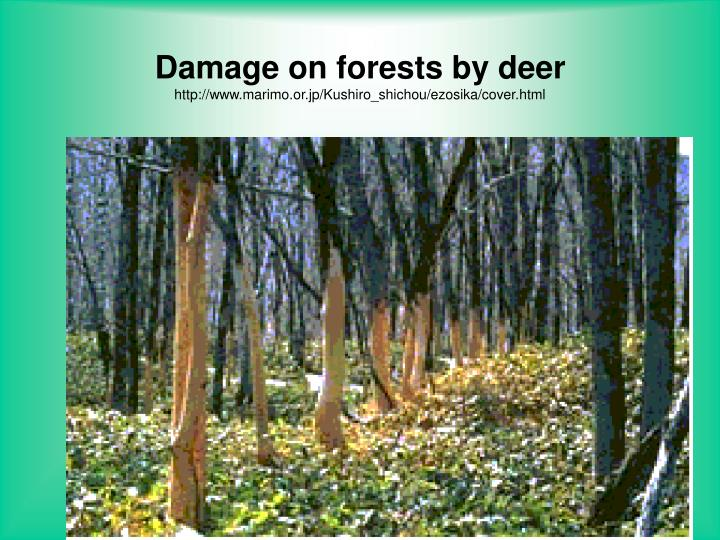 Damage on forests by deer