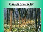 damage on forests by deer http www marimo or jp kushiro shichou ezosika cover html