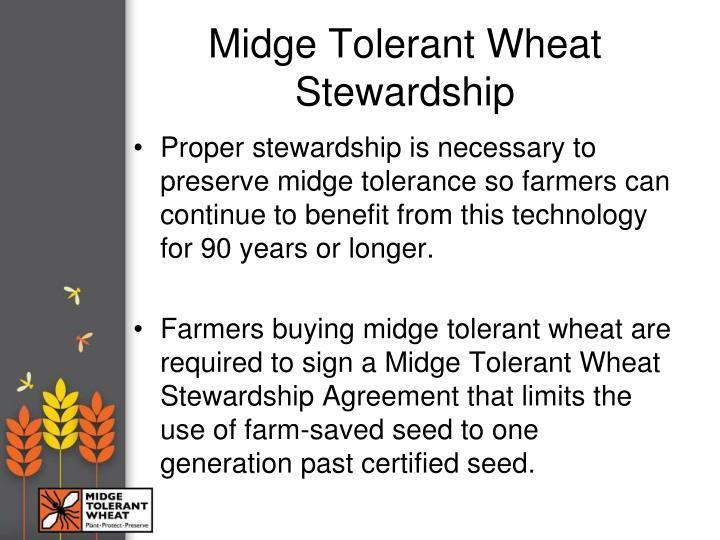Midge Tolerant Wheat Stewardship