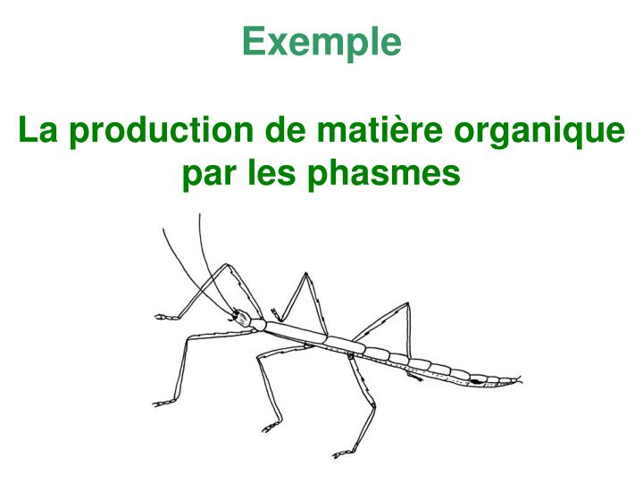 La production de mati re organique par les phasmes