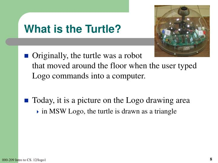What is the Turtle?