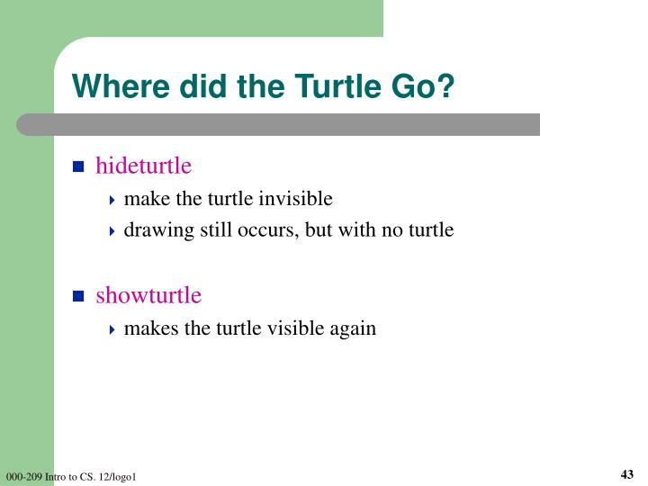 Where did the Turtle Go?