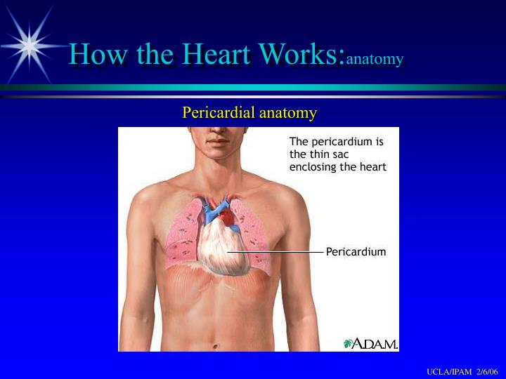 How the Heart Works: