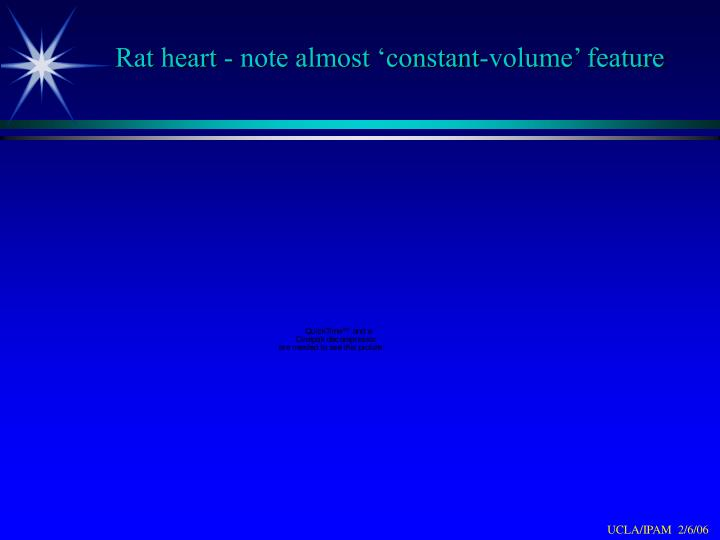 Rat heart - note almost 'constant-volume' feature
