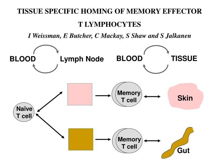 Memory              T cell