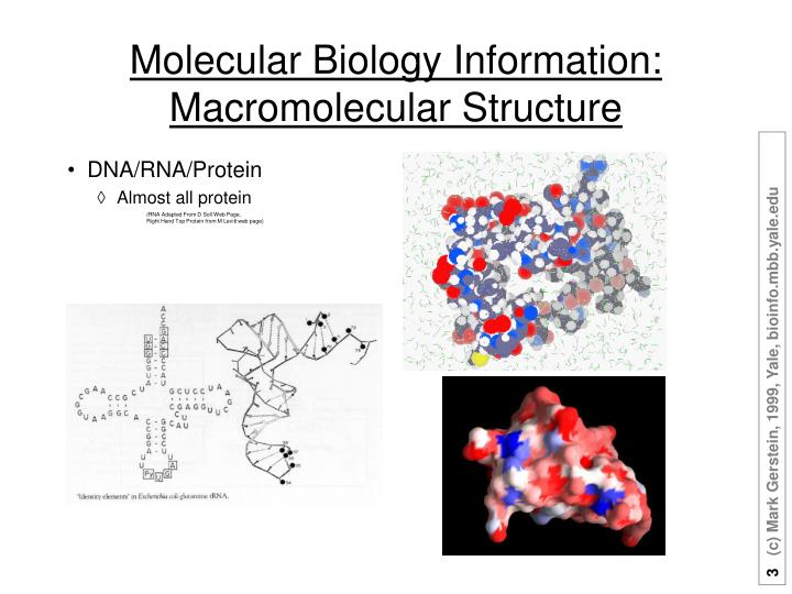 Molecular Biology Information: