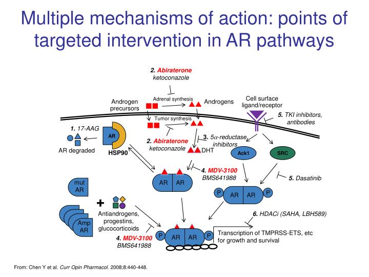 Multiple mechanisms of action: points of targeted intervention in AR pathways
