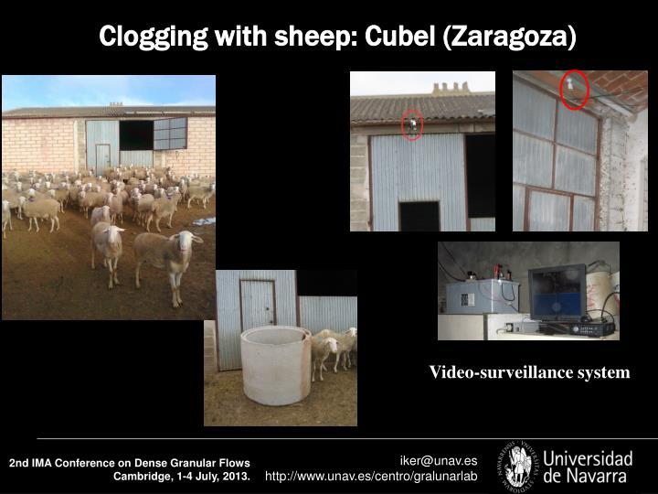 Clogging with sheep: Cubel (Zaragoza)