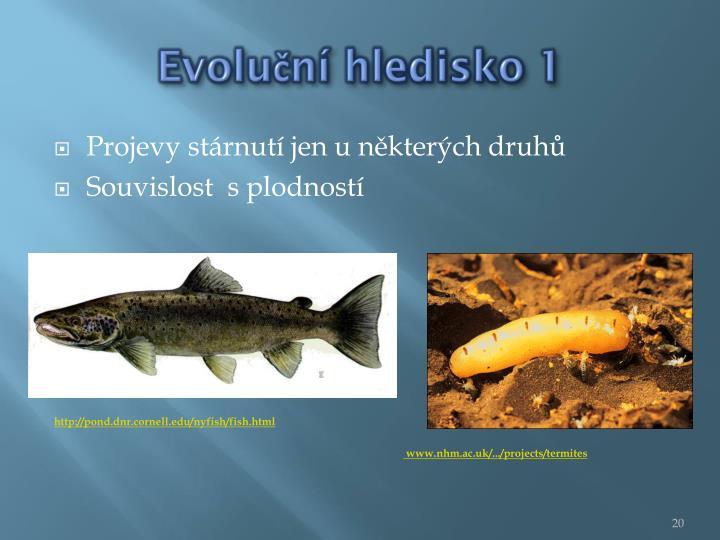 Evoluční hledisko 1