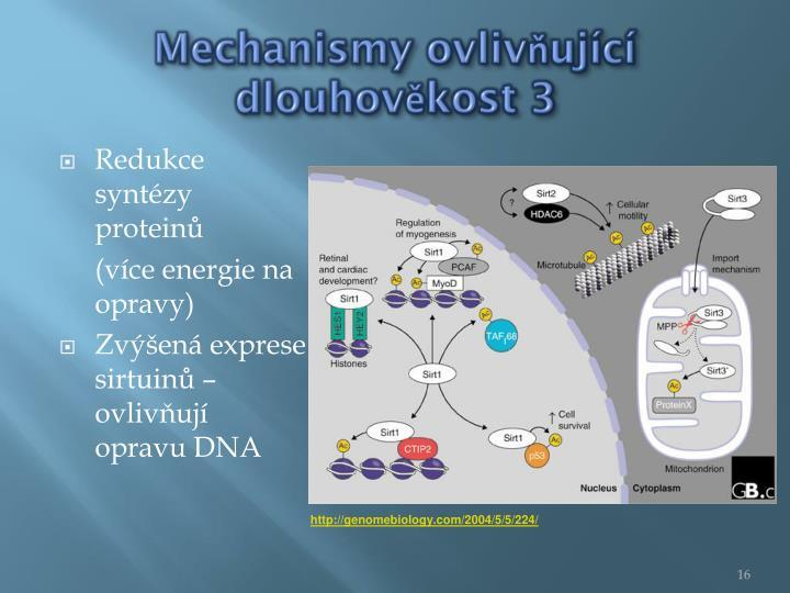Mechanismy ovlivňující dlouhověkost 3