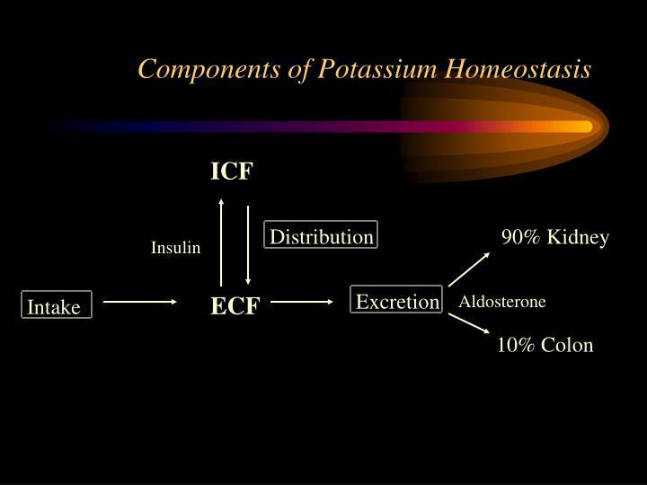 Components of Potassium Homeostasis