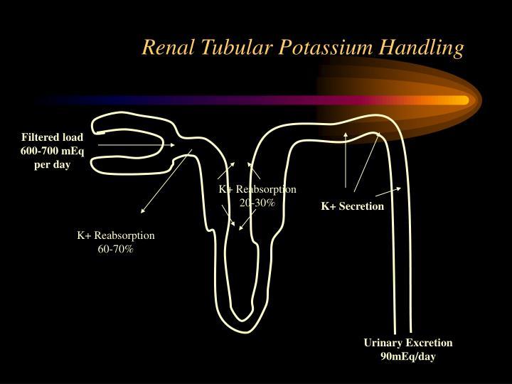 Renal Tubular Potassium Handling