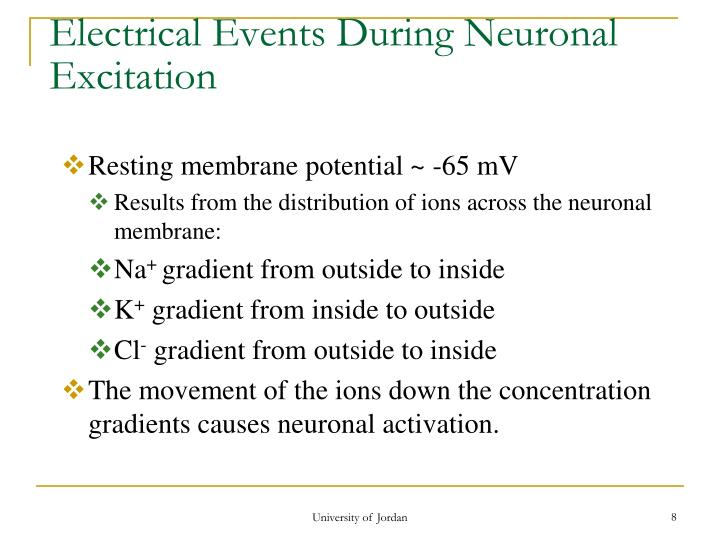 Electrical Events During Neuronal Excitation