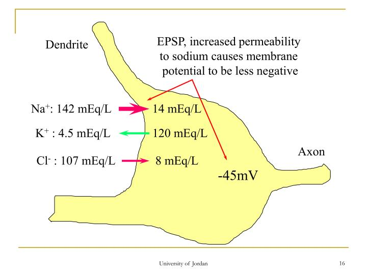EPSP, increased permeability