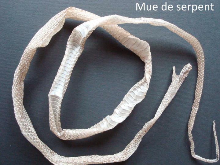 Mue de serpent