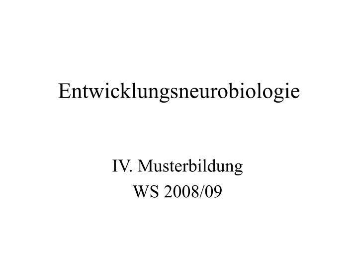 Entwicklungsneurobiologie