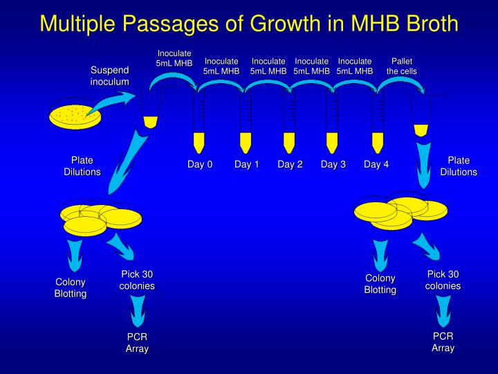 Multiple Passages of Growth in MHB Broth