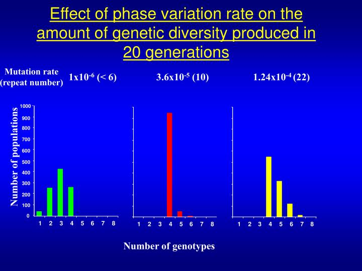 Effect of phase variation rate on the amount of genetic diversity produced in 20 generations