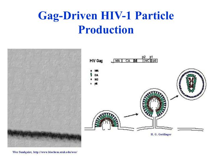 Gag driven hiv 1 particle production