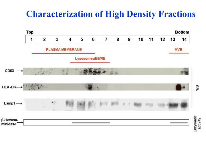 Characterization of High Density Fractions