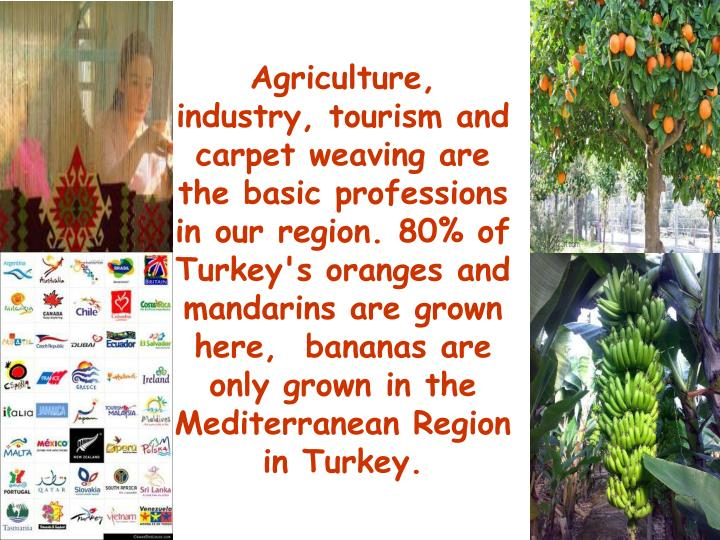 Agriculture, industry, tourism and carpet weaving are the basic professions in our region. 80% of  Turkey's oranges and mandarins are grown here,  bananas are  only grown in the Mediterranean Region in Turkey.
