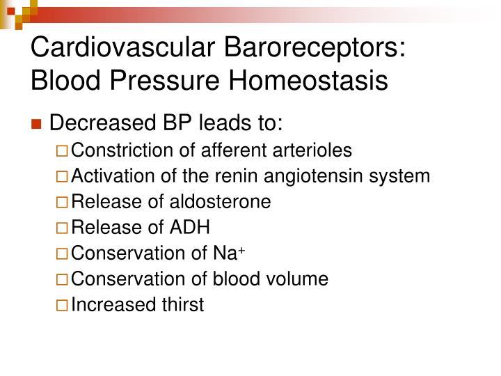 Cardiovascular Baroreceptors: Blood Pressure Homeostasis