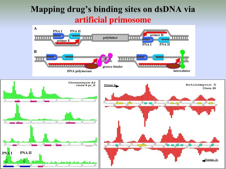 Mapping drug's binding sites on dsDNA via