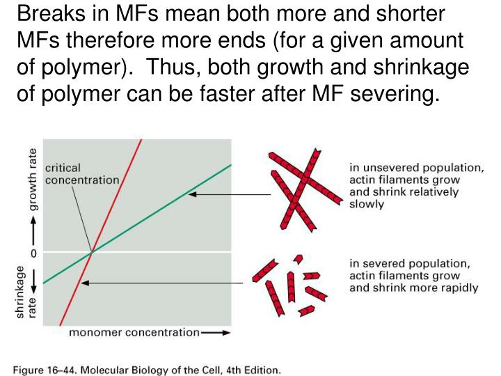 Breaks in MFs mean both more and shorter