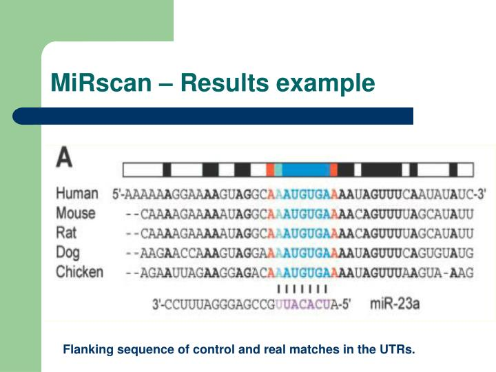 MiRscan – Results example