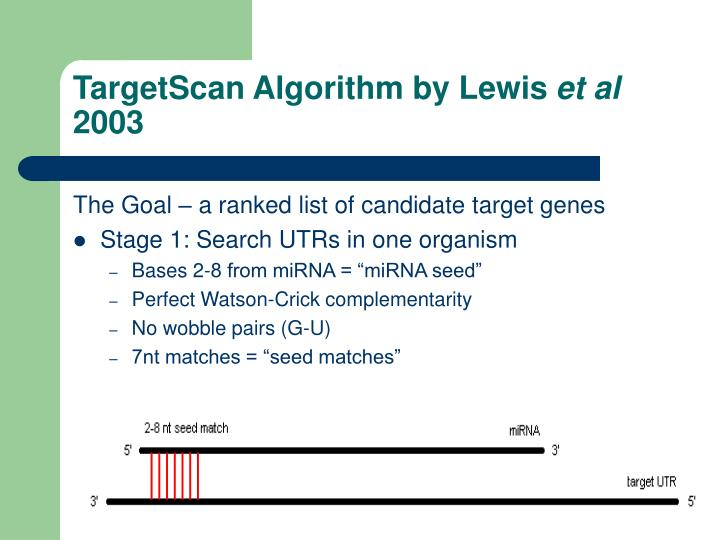 TargetScan Algorithm by Lewis
