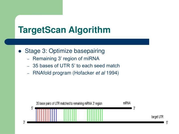 TargetScan Algorithm