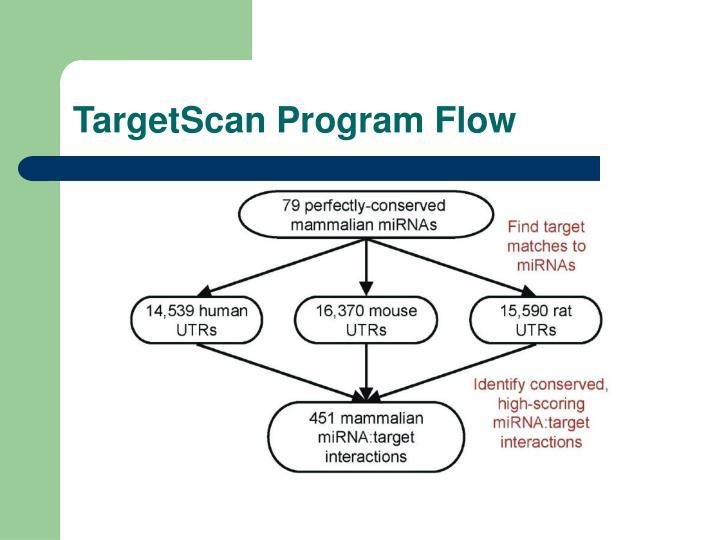 TargetScan Program Flow