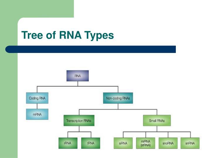Tree of RNA Types