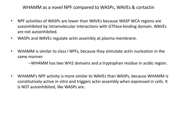 WHAMM as a novel NPF compared to WASPs, WAVEs & cortactin