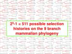 2 9 1 511 possible selection histories on the 9 branch mammalian phylogeny