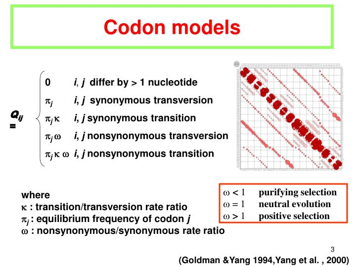 Codon models