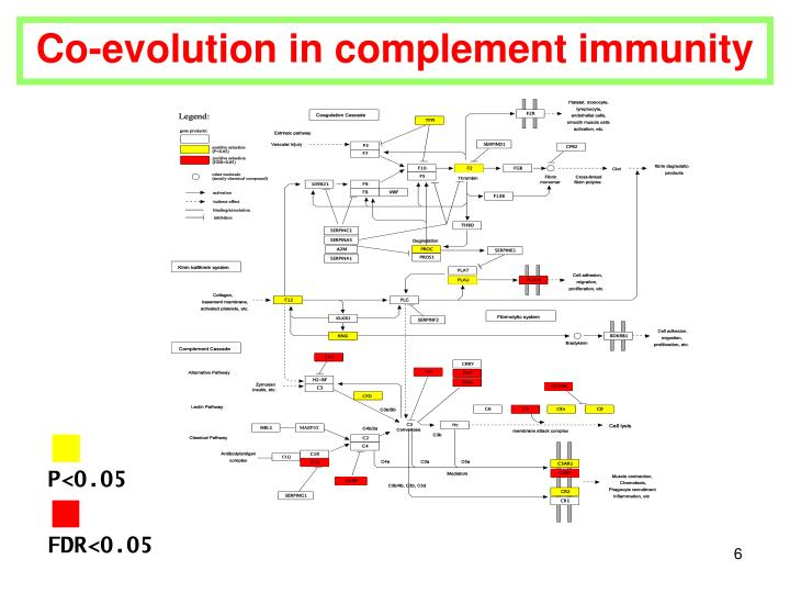 Co-evolution in complement immunity