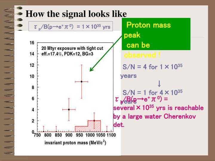 How the signal looks like