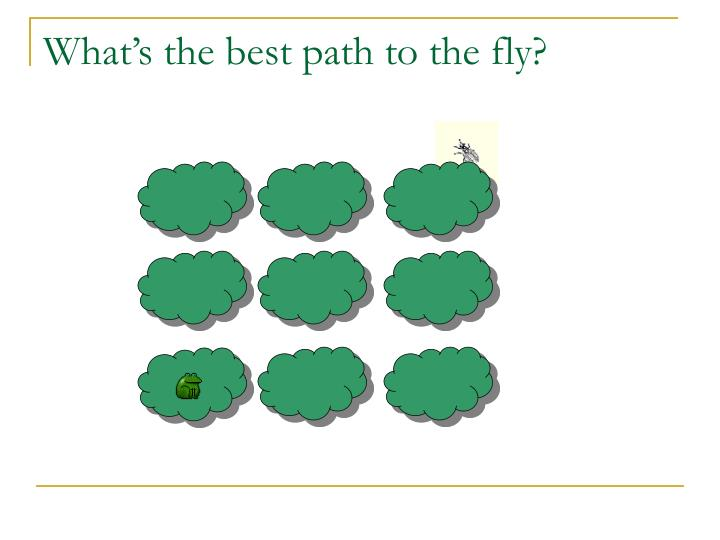 What's the best path to the fly?