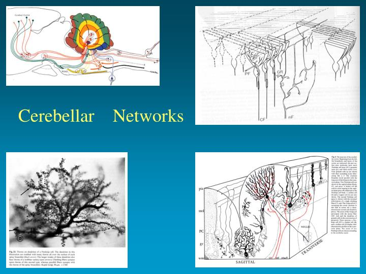 Cerebellar    Networks