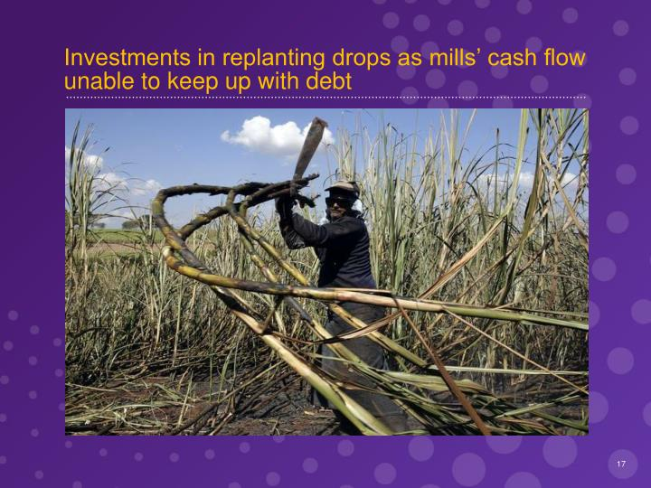 Investments in replanting drops as mills' cash flow  unable to keep up with debt